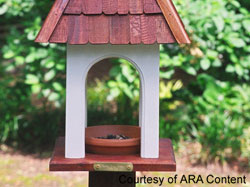 feed the birds in your backyard