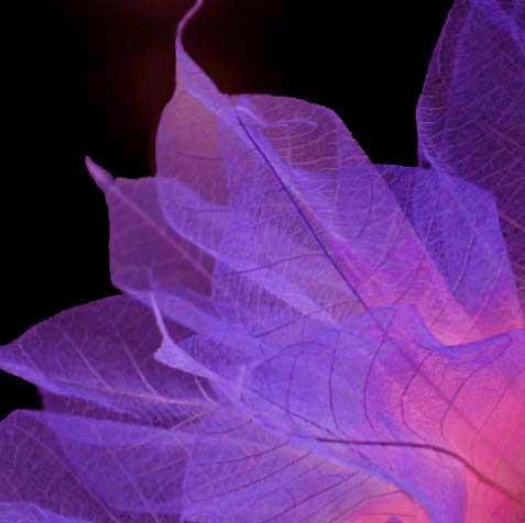 """""""Deep Lavender"""" Bodhi Leaf Flower String Lights - 9' length - Product Image"""