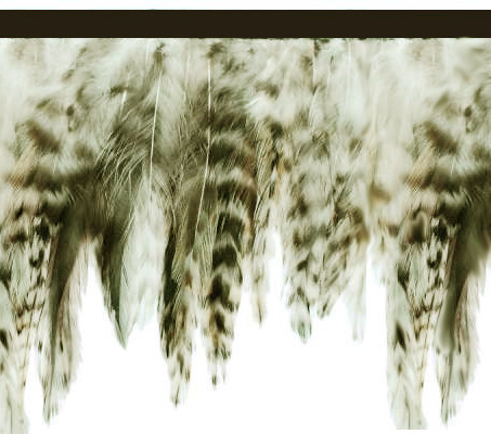 """""""City Jungle""""  Feather Trim - 10 Yd Bolt - Product Image"""